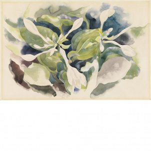 Charles Demuth, August Lilies, medium (26 x 18.74 in.) print